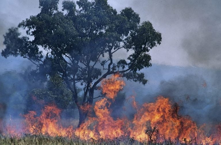 Apple accepts donations to the Red Cross to help fight Australia's fires