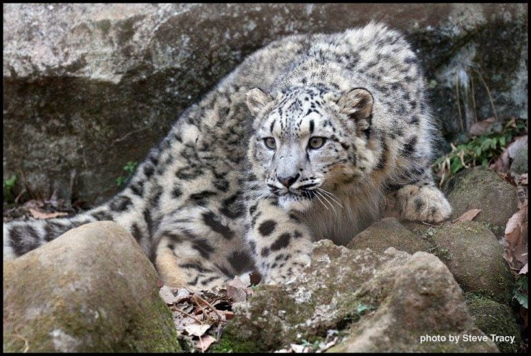 Are your applications ready for Snow Leopard?