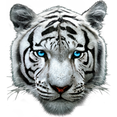 Between Tablets and Tigers