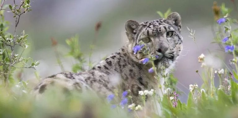 New Snow Leopard build unveils new features and improvements