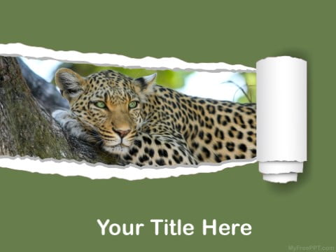 This is what the Leopard presentations have been like