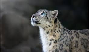 What's new in Snow Leopard, part II